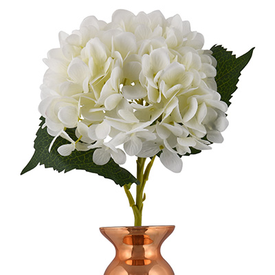 ethereal white hydrangea